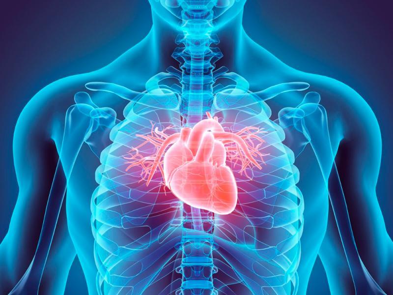 طب القلب  تركيا