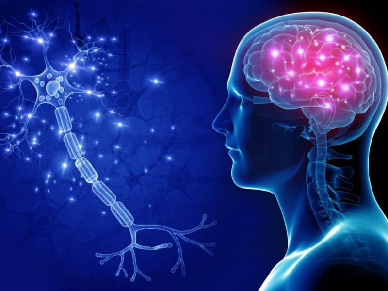 Neurology  Turkey