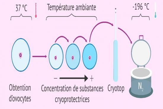 Congélation d'ovocytes 2 Turquie